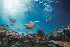 Great Barrier Reef - Australien Flitterwochen